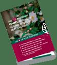 CAMELIA6