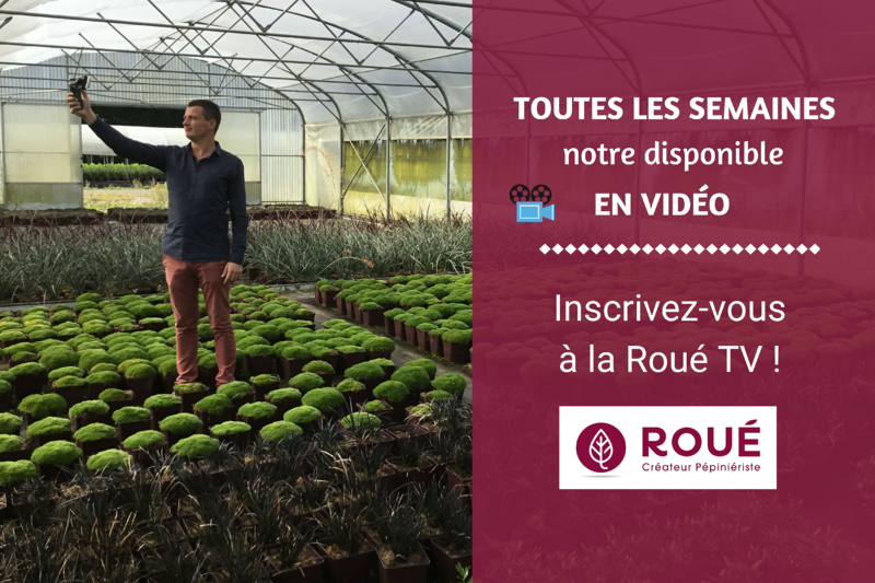 laurent video roue pepinieres