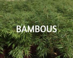 bambous roue pepinieres