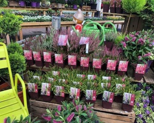 concours plantes bruyeres 3