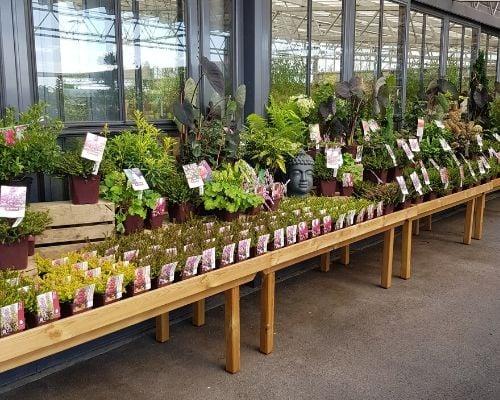 concours plantes bruyeres 4 bis