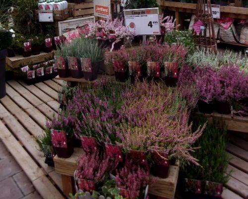 concours plantes bruyeres 5