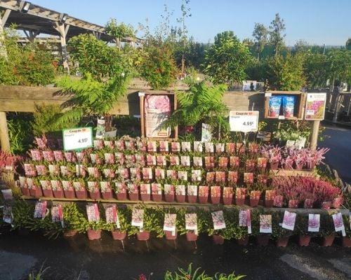 concours plantes bruyeres 6