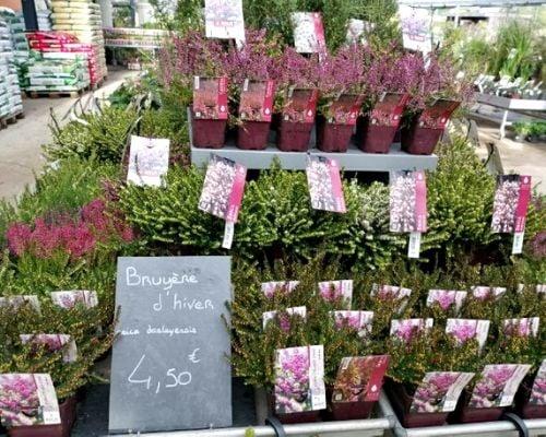 concours plantes bruyeres 7