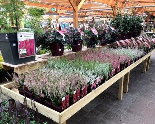 concours plantes bruyeres 8