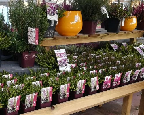 concours plantes bruyeres 9