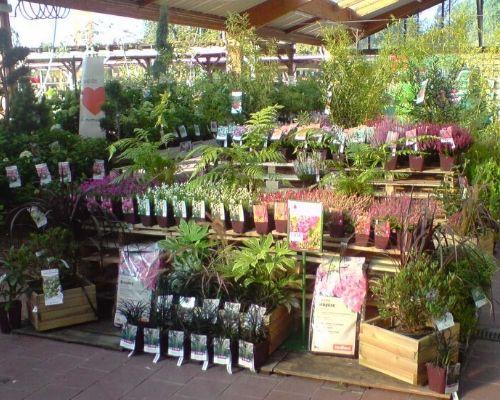 concours plantes bruyeres 1